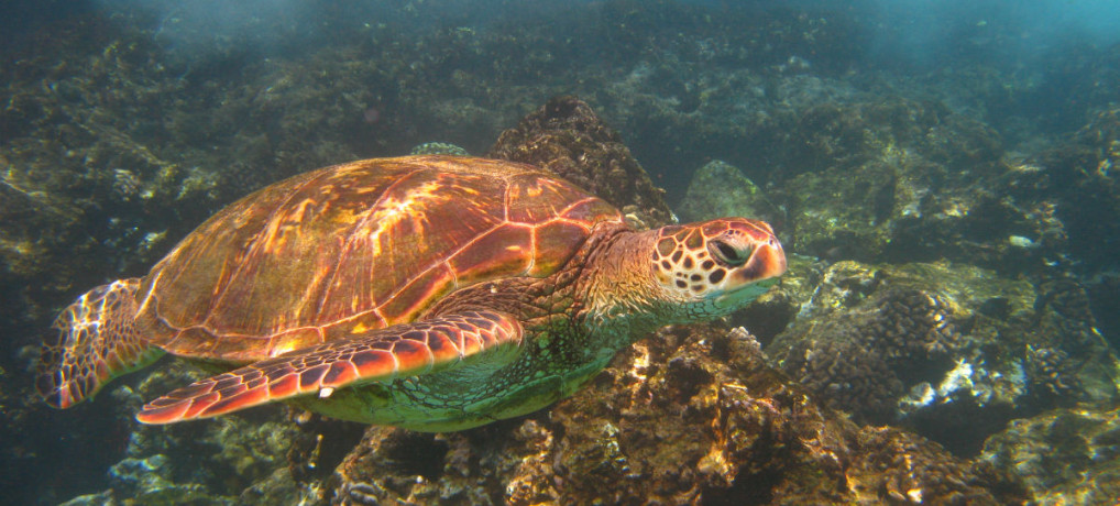 Best Places to see Sea Turtles in Maui for free!