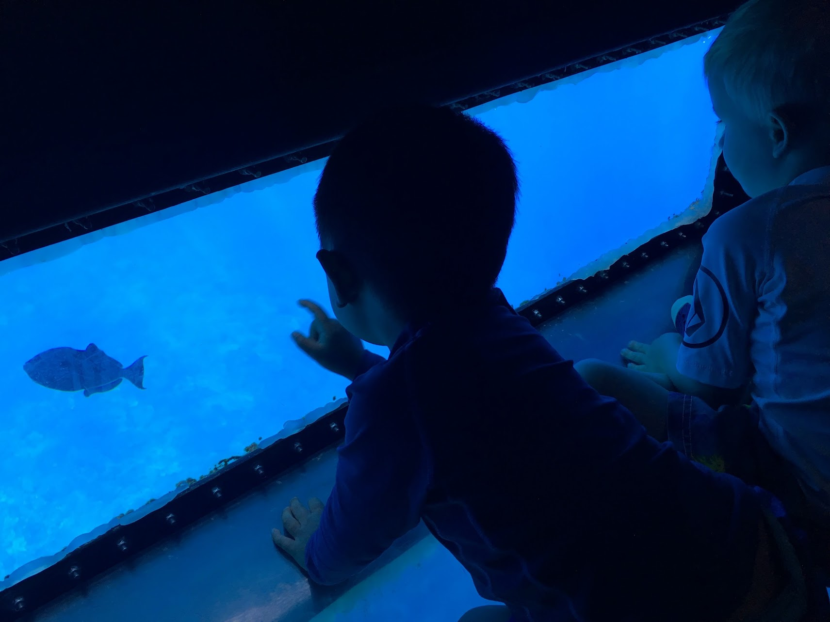 Four Winds II - glass bottom and Best Maui Snorkeling Trips for Kids