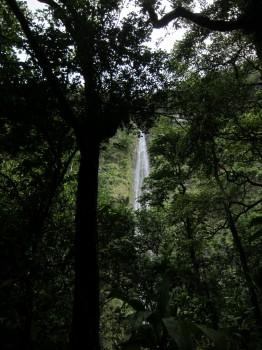 Pipiwai Trail - 10