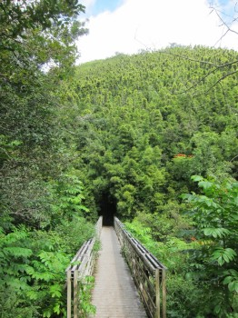 Pipiwai Trail - 4