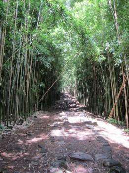 Pipiwai Trail - 7