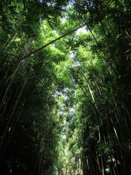 Pipiwai Trail - 8