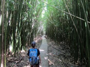 Pipiwai Trail - 9