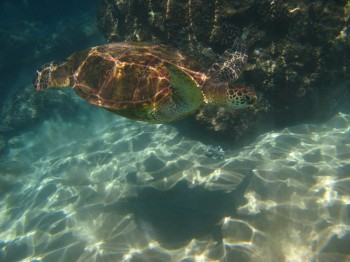 blackrock turtle-19