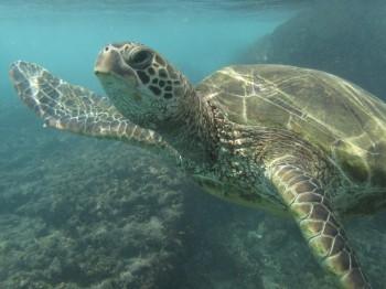 blackrock turtle-4
